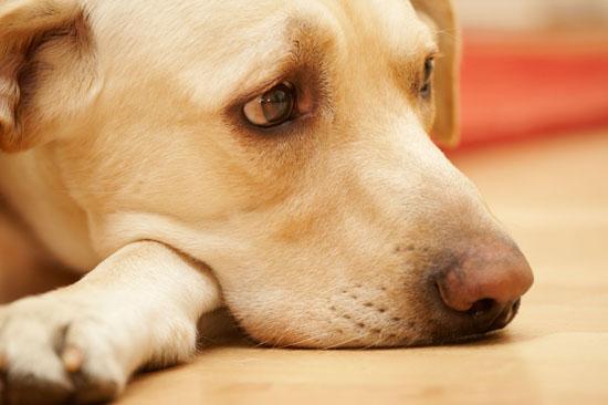 Чем усыпить собаку самостоятельно