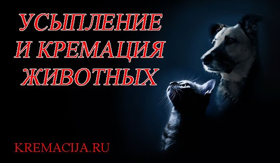 Индивидуальная кремация животных в Москве
