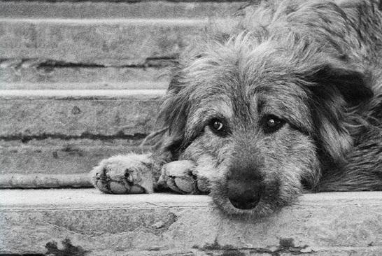Как помочь животному в последние часы жизни