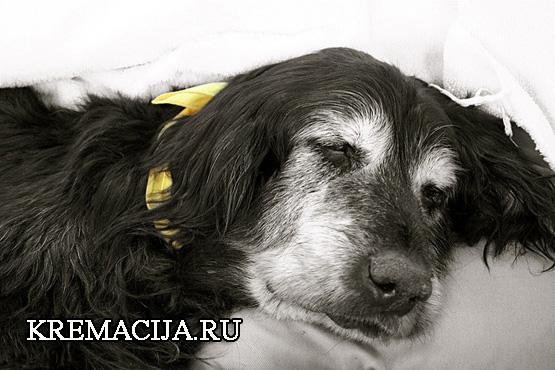 Кремация собаки в Москве