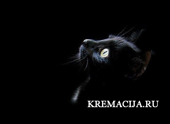 Кремация животных в Москве цены
