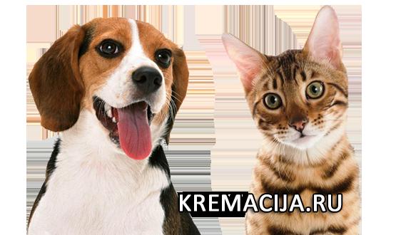 Крематорий для домашних животных