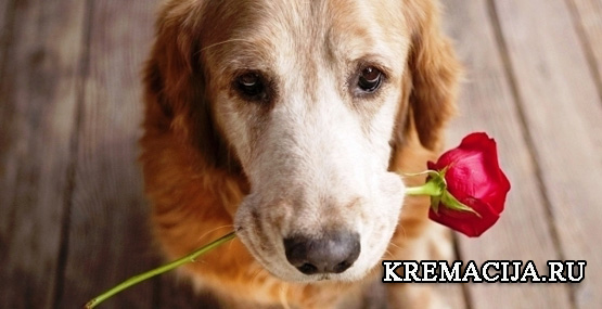 Кремация домашних животных цены