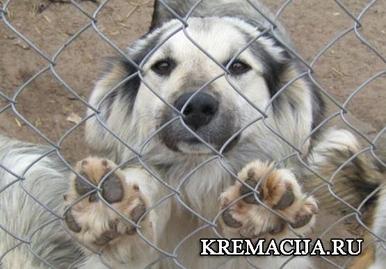 Отлов собак в Московской области