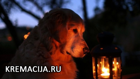 Похороны домашних животных