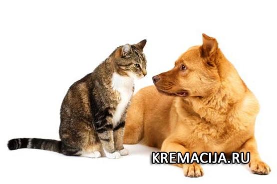 Похороны для собак и кошек