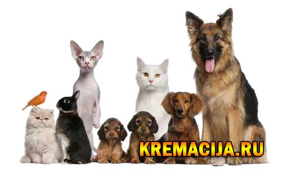 Кемация собак, кошек и грызунов