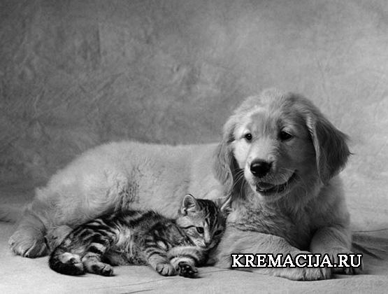 Служба кремации домашних животных