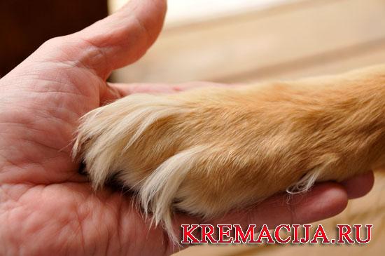 Стоит ли кремировать собаку или кошку
