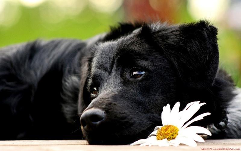Стоит ли усыплять собаку, кота или кошку