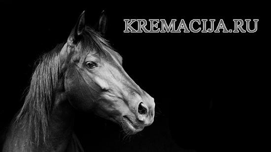 Усыпление и кремация лошадей