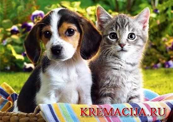 Усыпление и кремация животных Москва и Подмосковье