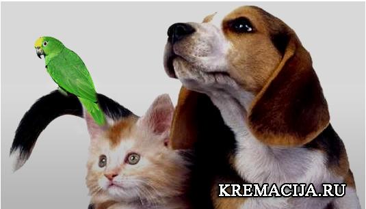 Усыпление и кремация животных