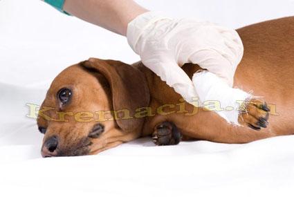 Усыпление и кремация собак