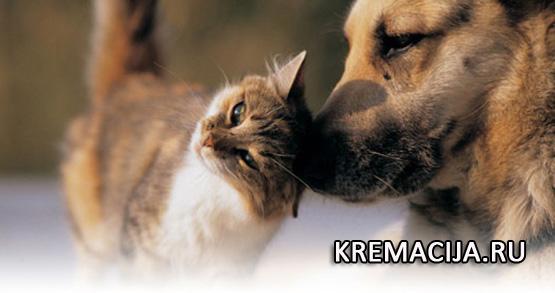 Усыпление и кремация животных в Красногорске