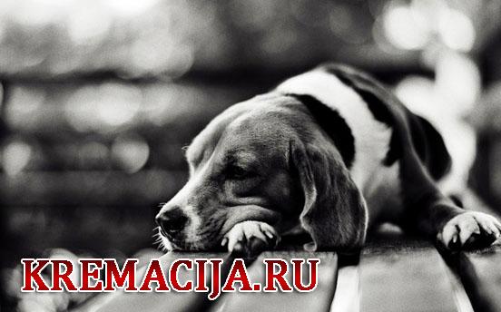 Усыпление животных Москва