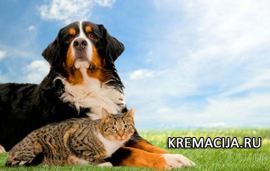 Усыпление животных на дому с вывозом