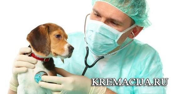 Выезд ветеринара на дом