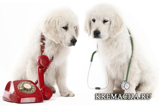 Вызов ветеринара для усыпления